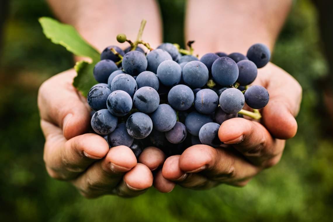 iStock-496701460-grapes-1500-1000-72